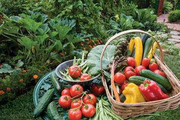 OrganicGardening_thedailycrisp