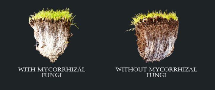 mycorrhizalfungi_header